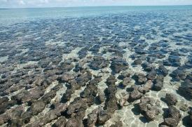 Hamlin Pool und Stromatoliten-4389
