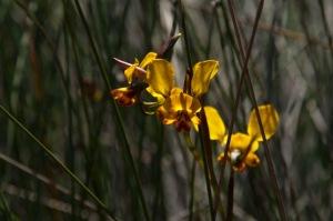 Wildblumen auf Riverside-4463