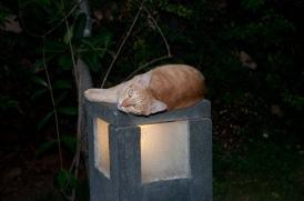 Alam Batu Katzen-5