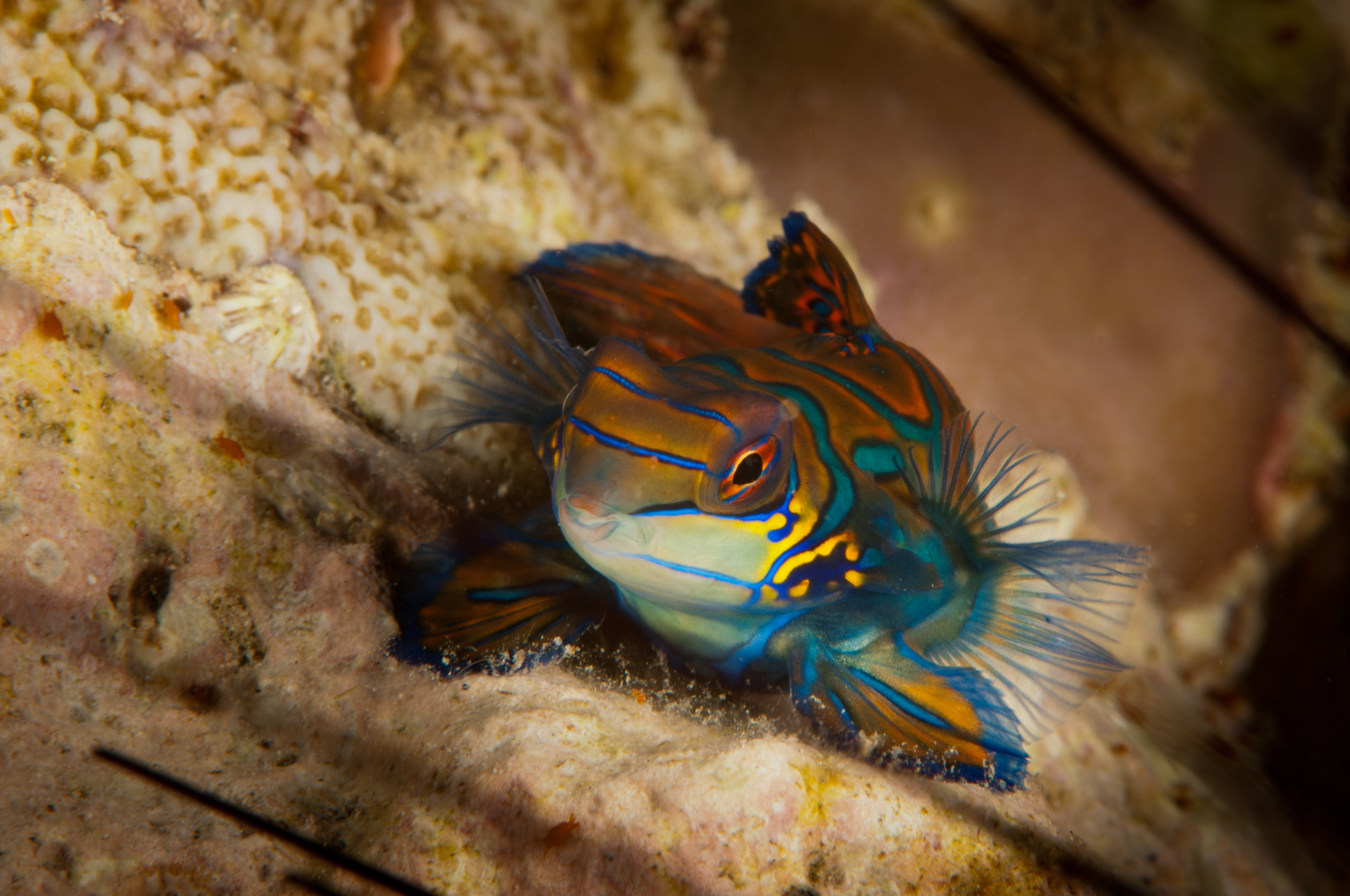 Mandarin Fische-3