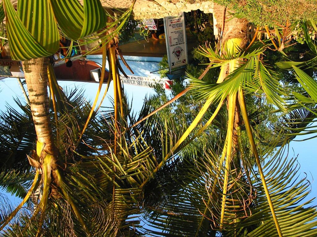 Der Blick zurück ... von unter meiner Palme, Boracay 2001