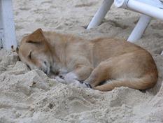 Immer mit der Ruhe, Boracay White Beach 2001